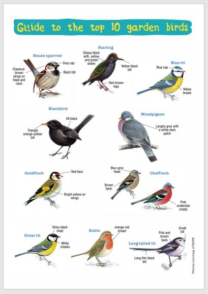 bird id