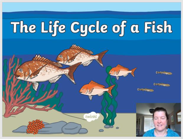 life cycle of a fish image