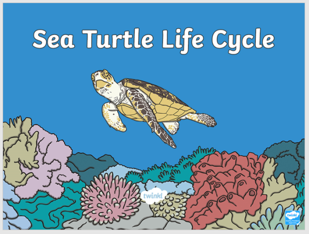 life cycle of a sea turtle ppt image